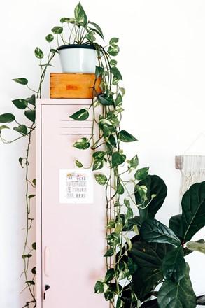 Skinny Locker by Mustard Made - Blush Pink