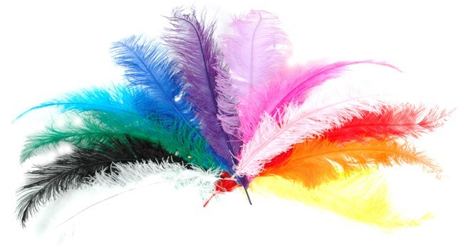 forum currency Ostrich-Feathers-Large-18-quot-aprox_0_0_64OM